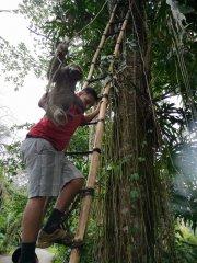 Baby sloth rescue