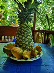 Tropical_fruits_at_CIME.jpg